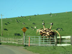 fsm pasture