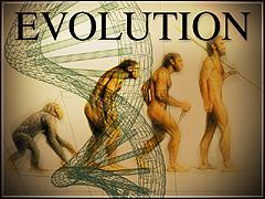 evol2.jpg