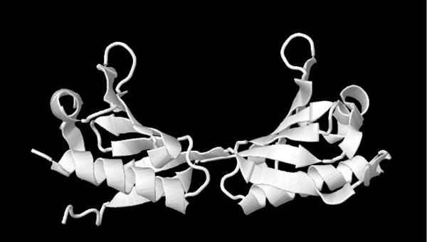 fsmprotein.jpg