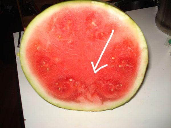watermelon21.jpg