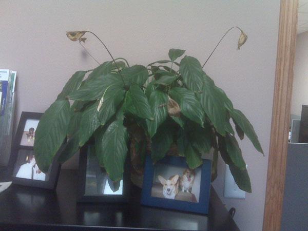 fsmplant.jpg