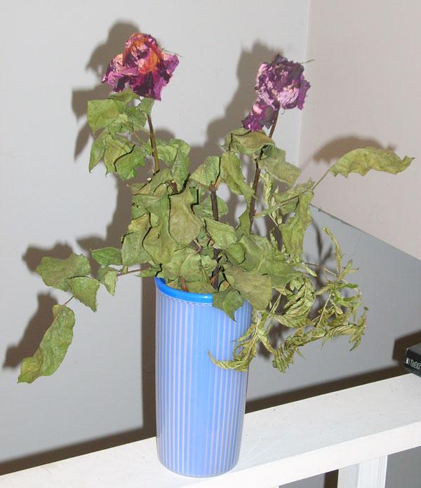deadplant.jpg