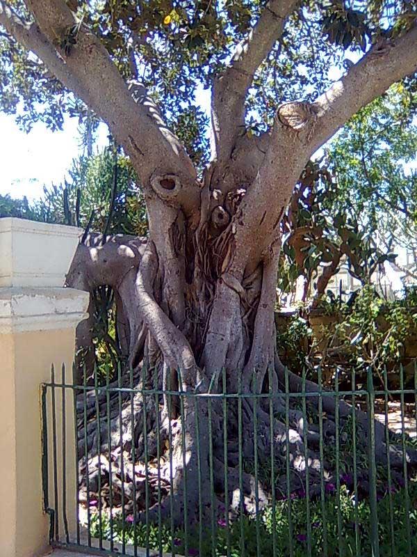fsmtree1.jpg