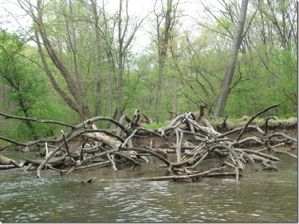 That water looks so cold.  You are a tough lady, Sarah.