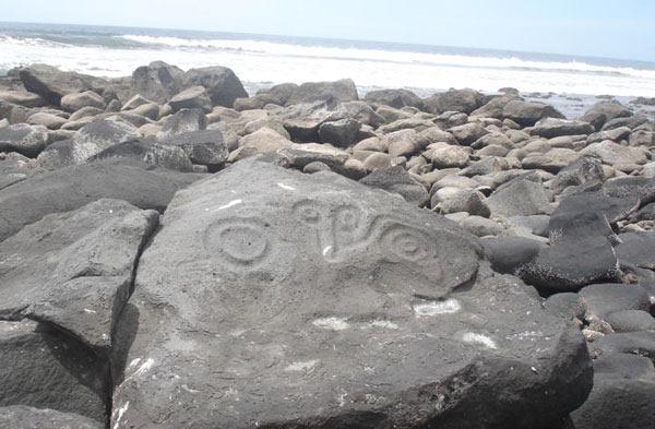 fossilrecord1