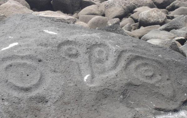 fossilrecord2