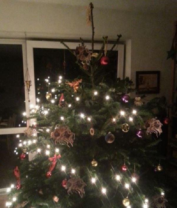 bianca fsmas tree